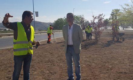El Ayuntamiento realiza una remodelación total de las rotondas y medianas de la entrada de Jaén por la Avenida de Granada