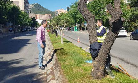 El Ayuntamiento informa de los trabajos de adecuación de jardinería de la mediana de Avenida Ruíz Jiménez