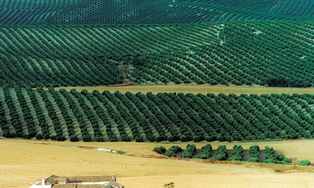 Olivares de Jaén. Patrimonio natural y humano en busca del reconocimiento mundial